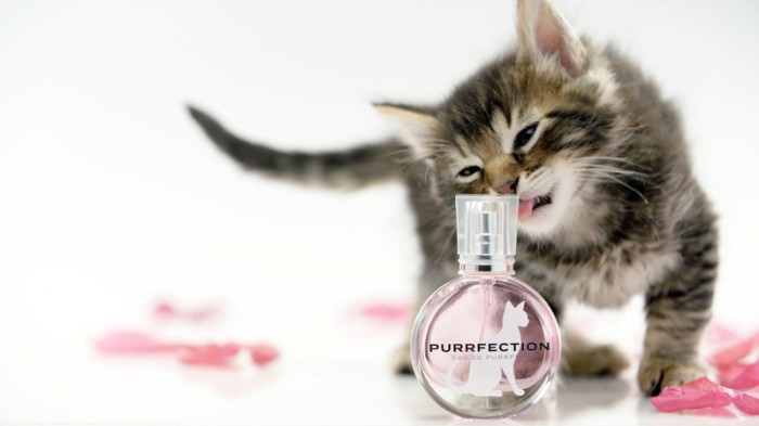purrfection_movie_poster